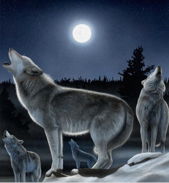 عجائب الذئب