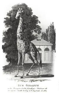 zoo-e-31