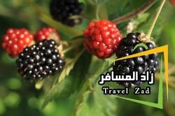 travelzad-b92b35770ee17d2bb673d283ebfeb5f4