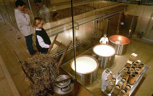 زيارة مصانع الأجبان والألبان الثلاث في زيل أمزيلر