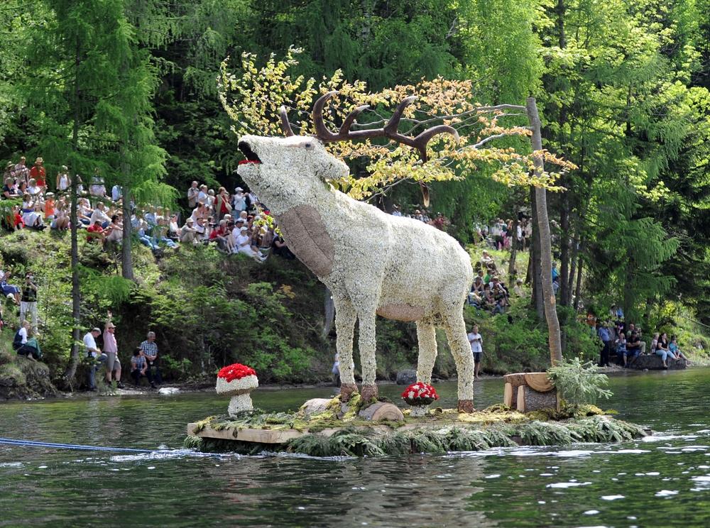 مهرجان النرجس البري المهرجان الأجمل فيالنمسا