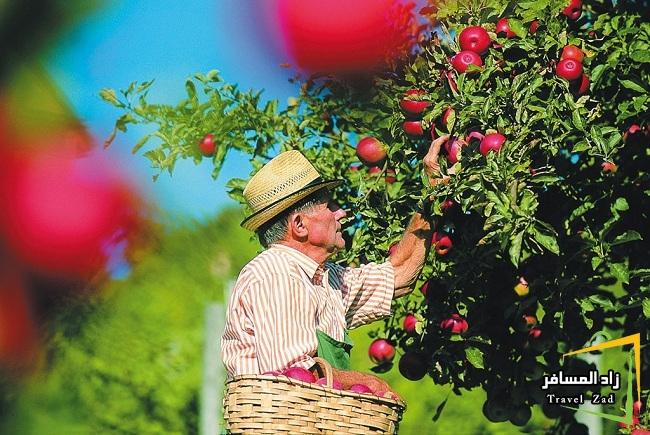طريق التفاح في ستيريا .طبيعة خلابة ومناظرساحرة