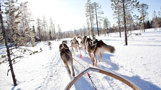 WINTERSPRING_Huskysafari_1