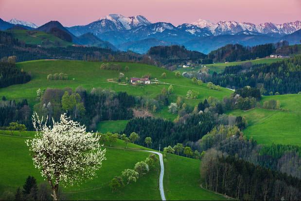 طرق حقول الكمثرىالنمساوية