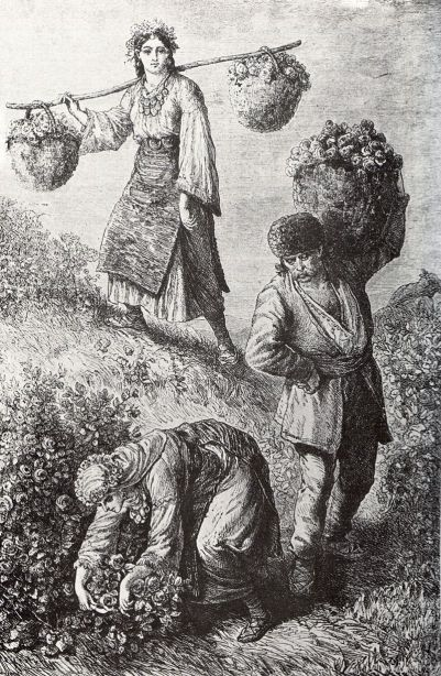 800px-Rose-picking_in_Bulgaria_1870ies