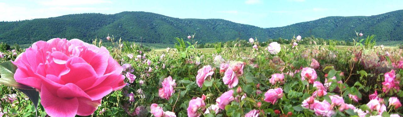 وادي الورود فيبلغاريا
