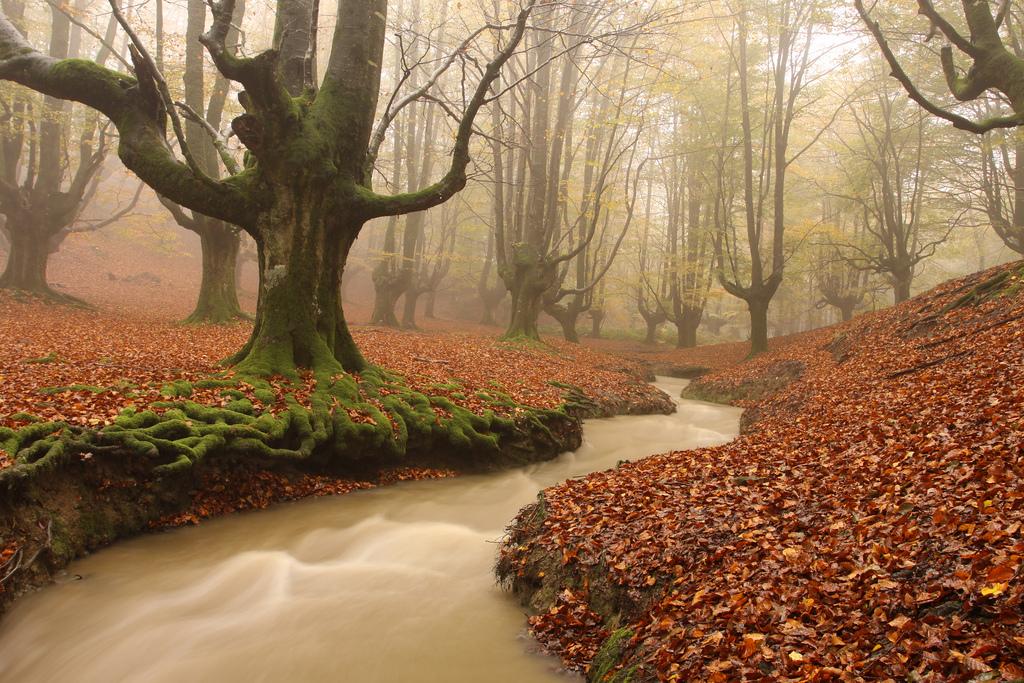 حديقة الطبيعة غوربيا