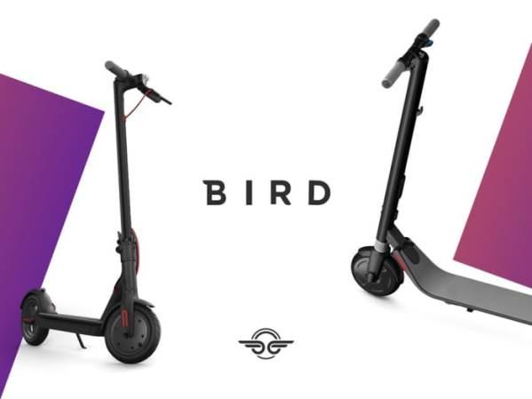 BirdScooter3_tazb