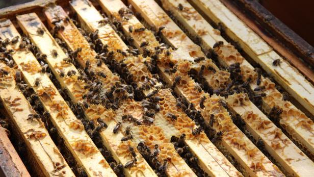 يوم النحل العالمي